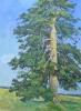 Кальницкий Н.Д.(1963-2010гг) Одинокая сосна,2009г. х.м. 76х56