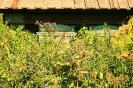 Сафронов_В.Д._1959г.р._На_ул_Нерпинской_2009г._фотография_303х20_ТКГ-310_Ф-19